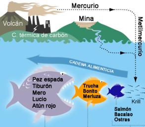 Ciclo-del-mercurio
